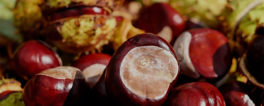 Save Yourself and the Ones You Love with Fruits & Vegetables